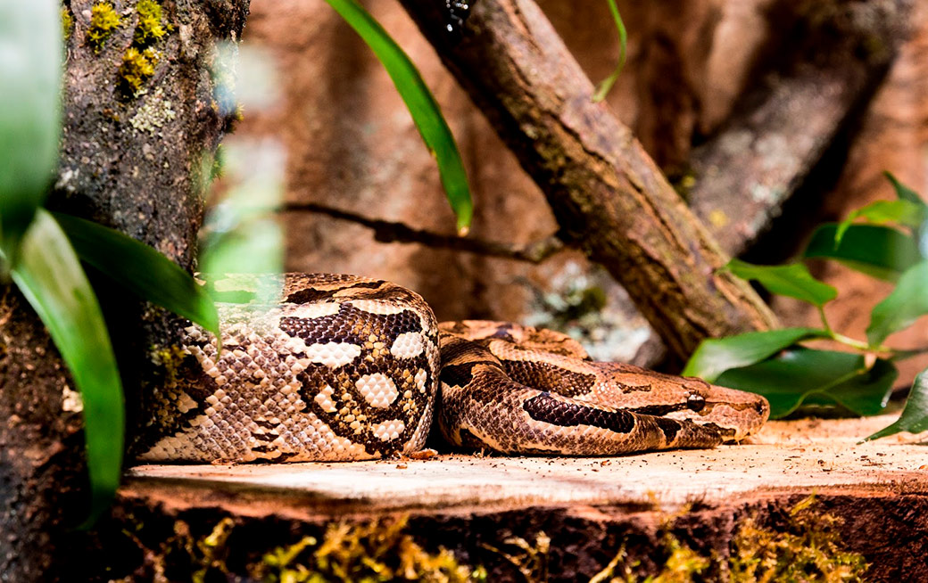 Python for all (1): Installation of the Anaconda environment