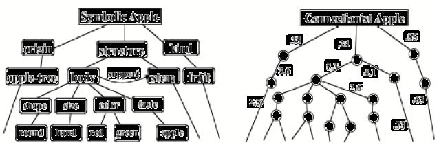 Symbolic and non-symbolic representation